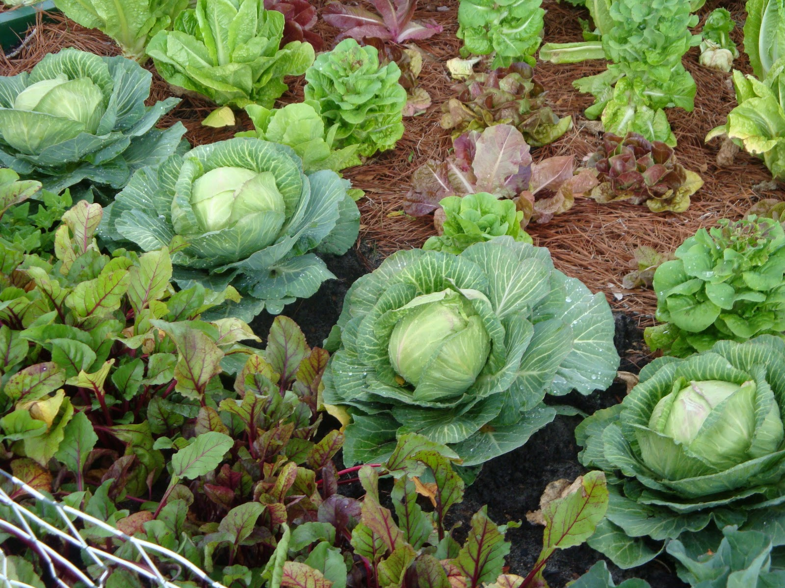 Small vegetable garden plans ideas - Planning An Urban Vegetable Garden 100th Seed